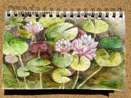 Audubon Lotus Garden