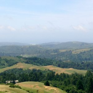 Djerassi Resident Arts Program
